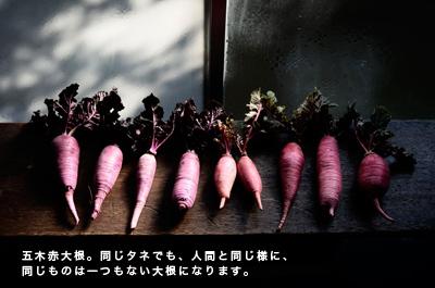 4月21日 【トークイベント】「古来種野菜を知っていますか」@メディアセブン 埼玉県川口