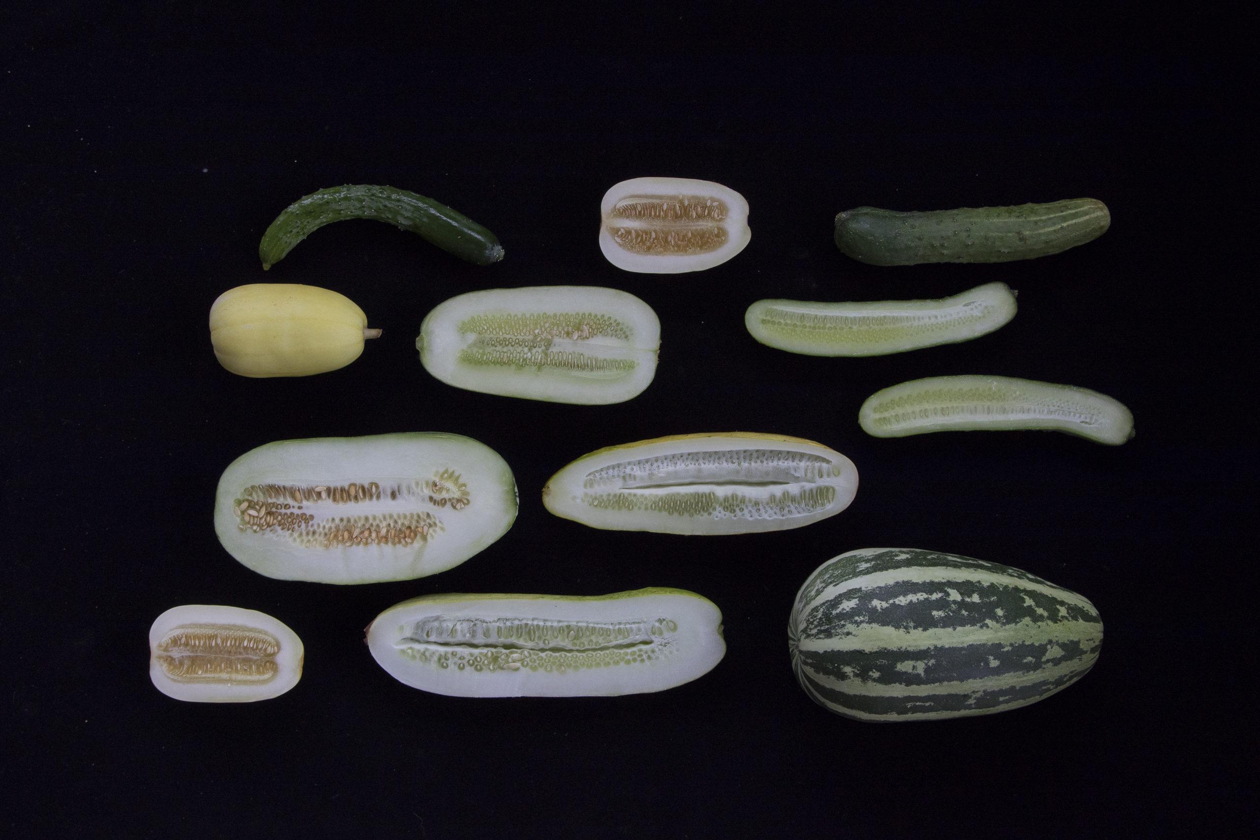 夏の野菜は種を食べる